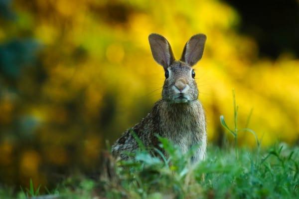 rabbit-min